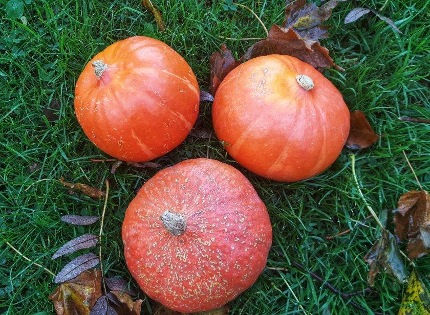 Pumpkins, Delalicious